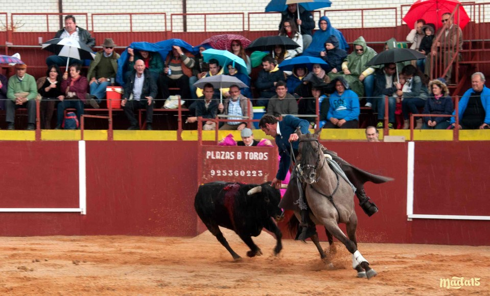 Festival-Carrion-caballo